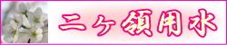 nika_banner